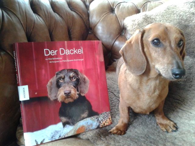 """""""Der Dackel"""" und Filmdackel Bodo"""