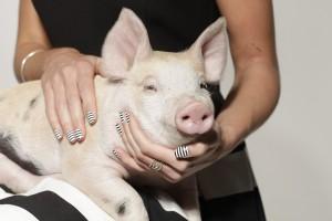 Filmschweinchen Klaus in der Zeitschrift JOY