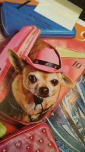 Filmhund Chihuahua Pepita für Myself Magazin